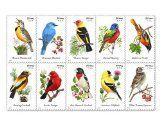 USPS Forever Stamps Songbirds Booklet of 20 - http://howtomakeastorageshed.com/articles/usps-forever-stamps-songbirds-booklet-of-20/
