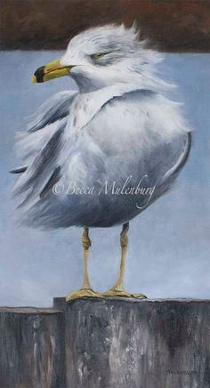 bird seagull painting wildlife original gull by beccaMulenburg, $425.00