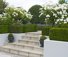 A structured and semi-formal garden in Blenheim - garden plans A structured and semi-formal garden in Blenheim - Garden Steps, Diy Garden, Dream Garden, Shade Garden, Garden Projects, Garden Landscaping, Landscaping Ideas, Patio Steps, Garden Paths