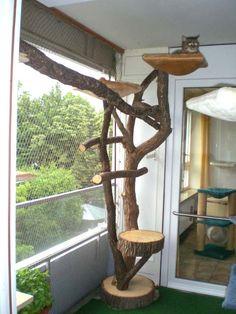 Naturkratzbaum, kleine Kletteranlage Os Pets, Cat Trees, Here Kitty Kitty, Cat Stuff, Ideas, Home Decor, All About Cats, Cat Breeds, Home And Garden