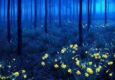 The Black Forest during night in Baden-Württemberg region, southwestern Germany.