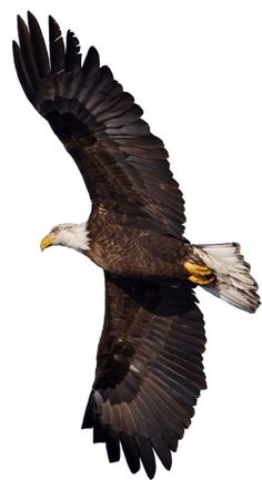 On Eagles Wings - creation.com
