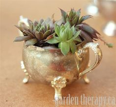 Growing succulents: Hens and Chicks in Vintage Silver Dinnerware - I think this is a sugar bowl.