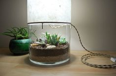 This Table Lamp Doubles As A Terrarium/Display Case