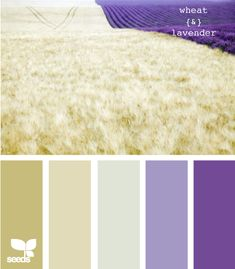 Wheat and Lavander