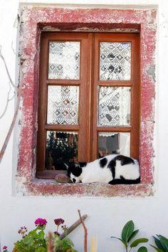 =^.^= CÅt§ in The Window ♥