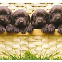 puppies in a basket | eight in a row and not room for one more