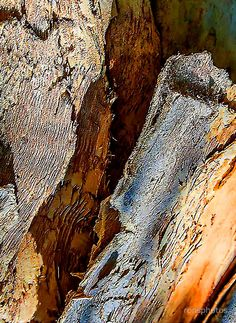 'Rough textures in bark; Samsung Galaxy Cases, Iphone Cases, Wood Texture Background, Framed Prints, Art Prints, Tree Bark, Pattern Making, Tote Bags, Palette