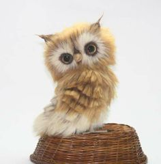 Little owlet Shunechka by Oksana Timchenko