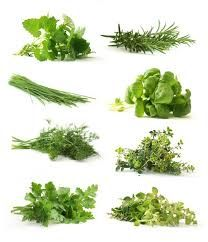 herbs - Google Search