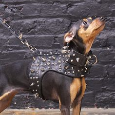 noir heavy metal dog harness vest by Chien Coature $413