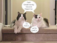 thefeministcats1.jpg (2640×1980)