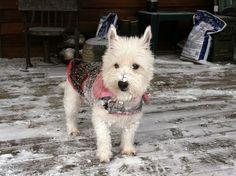 Bella in the snow.