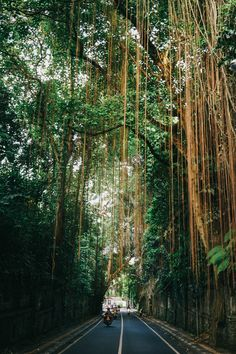 The Immersive Guide to Ubud Bali — Bon Traveler