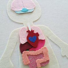 Órganos del cuerpo anatomía humana fieltro por CircleTimeDesigns