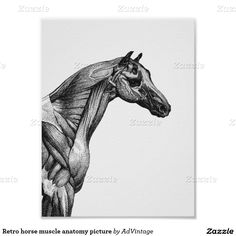 Anatomy practice - horse facial muscles by Lambidy.deviantart.com on ...