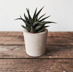 Round Concrete Planter available at Housekeeping Store.