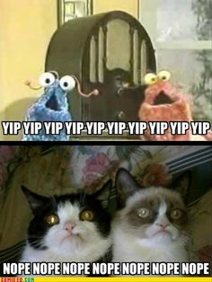Pokey and Tard the Grumpy Cat