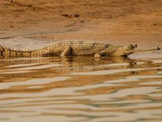 National Chambal Sanctuary - in Rajasthan, India
