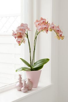 A nice light phalaenopsis orchid would mathc perfect in a light interior with a touch of gold!
