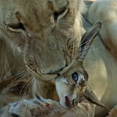Kgalagadi Transfrontier Park, Northern Cape, South Africa