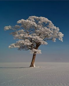 Ice Tree Beautiful View   Full Dose