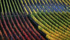 """Im Rebensaft vereint... #Wein Artikel über den Band """"Geschichte des Weines in BW"""" Ausführliche Infos im Webshop: http://www.kohlhammer.de/wms/instances/KOB/appDE/nav_product.php?product=978-3-17-028560-6&world=BOOKS"""