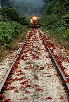 Christmas Island, Australia red crabs www.tricityliving.ca
