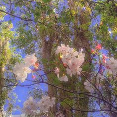 aesthetic cherry blossoms in San Francisco 🌸 spring sakura Angel Aesthetic, Nature Aesthetic, Flower Aesthetic, Aesthetic Vintage, Aesthetic Photo, Aesthetic Pictures, Aesthetic Style, Aesthetic Backgrounds, Aesthetic Iphone Wallpaper