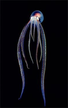 Magical creature from a different world, just described in lines of coloured light. #inkfish #octopus # deepsea