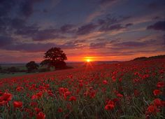Peter Hulance Landscape Photography: Sunset over a poppy field Remembrance Day, Felder, To Infinity And Beyond, Great Photos, Amazing Pictures, Pretty Pictures, Beautiful Landscapes, Land Scape, Mother Nature