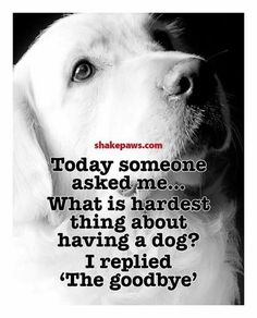 Funny Labrador Dog Quotes And Sayings – The Paws I Love Dogs, Puppy Love, Cute Dogs, Souvenir Animal, Pet Sitter, Pet Loss Grief, Dog Poems, Pet Remembrance, Amor Animal