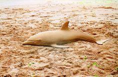 Dolphin Sand Sculpture