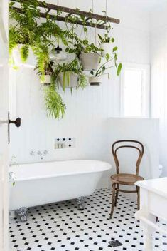 Guide explaining the best plants for your living room, bathroom, and bedroom. Many types of plants can actually thrive in your bathroom.