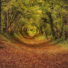 Tree Tunnel  In England