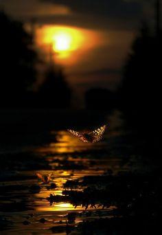 Dream a little dream... Image Nature, All Nature, Amazing Nature, Amedeo Modigliani, Beautiful Sunset, Beautiful World, You're Beautiful, Beautiful Things, Color Photography