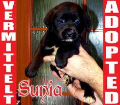 SUNIA found a new home in Germany few minutes ago. Good luck, little friend! www.AnimalHelp-World.jimdo.com