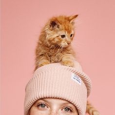 Cat Nutrition Facts H Fall Knitting, Beautiful Lion, Cat Ages, Cat Nutrition, Cat Store, Cat Food, I Love Cats, Cats And Kittens, Cat Lovers