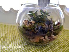 Too cold to garden outside? Create a terrarium indoors instead, with directions from Noelle at the Birds & Blooms Blog.