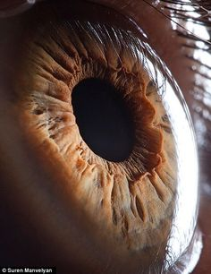 It blows me away on how complex and beautiful and eye is!  Macro eye photos