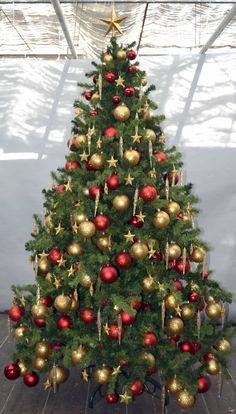 Enterprise Plantsaa; Christmas