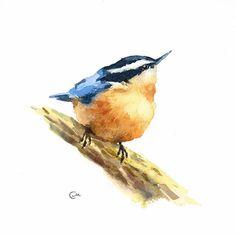 Aquarelle oiseaux Sittelle - Original aquarelle peinture 7 4/5 x 7 4/5 po