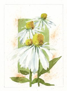 Watercolor, Coneflowers (study), by Jake Marshall, 2015.