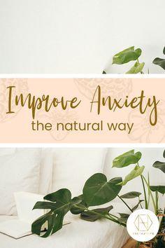 Supporting the health of the central nervous system, improving gut health and having a lower GI than normal sugar are just a few reasons why our honey can help alleviate some symptoms of anxiety. If you're looking for a natural approach, discover how it can benefit on our blog. To receive 20% off your first order of active honey, please sign up to the newsletter. #luxuryhoney #jarrahhoney #redgumhoney  #nectahive #anxiety  #antimicrobial #anitmicriobialhoney #healinghoney