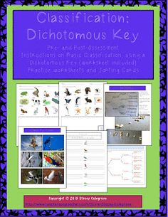 science classification dichotomous key assessments worksheets cards assessment keys and. Black Bedroom Furniture Sets. Home Design Ideas