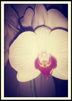 #flower#beauty#fresh#pink#wonderful#magic