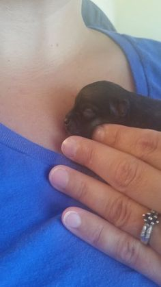 My new paperanian at 37 hours old. She's unbelievably tiny.