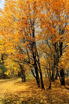 16E Autumn (Sault Ste Marie, Ontario) by Ann J P af.c.
