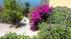 Afionas, Kerkyra Athens, Corfu Greece, Plants, Plant, Athens Greece, Planets
