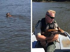 Two officers were on water patrol when they spotted a fawn deer that was swimming in circles, distressed and exhausted. Luckily, FWC Officer Baber was able to reach out into the water, grab the fawn and bring it to safety. Since 1 side of the river had a very steep embankment, there was only 1 place the mother could be. The fawn was released safely on the bank of the river. This is Officer Baber's first rescue, having just graduated from the FWC academy.